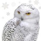 Салфетка 33х33 см  3-х слойная, AVANTGARDE, Полярная сова