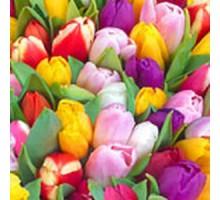 Салфетка 33х33 см  3-х слойн,ATELIER, Радуга тюльпанов