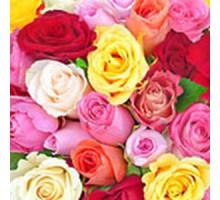 Салфетка 33х33 см  3-х слойная, ATELIER, Летние розы