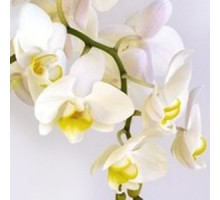 Салфетка 33х33 см   3-х слойная, VIVA, Орхидея