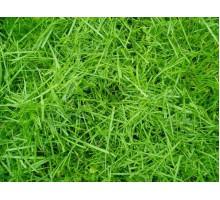 """Скошенная трава"""" Аромат(отдушка)  для мыла Франция"""