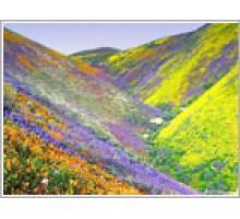 """Отдушка-аромат  для мыла  Альпийские цветы"""", Франция"""